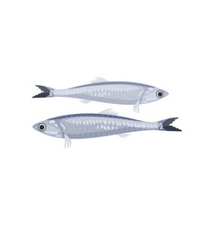 Detailed flat icon of two small sprats vector