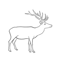 drawing deer vector image
