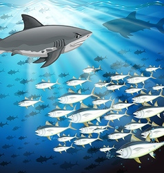 Sharks and fish under the ocean vector image