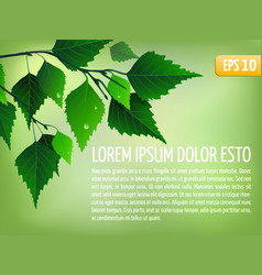 Spring background with leaves vector