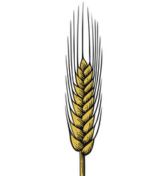 wheat vintage engraved vector image vector image