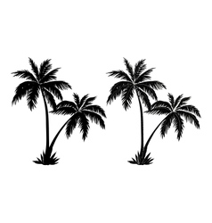 Palm trees black silhouettes vector