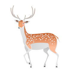 elegant deer on a white background vector image vector image