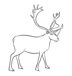 drawing reindeer vector image