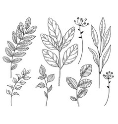 hand drawn different leaves and branches set vector image