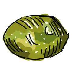 sapo melon on white background vector image