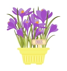 with flower pot vector image