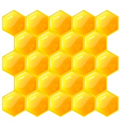 honeycomb isolated on the white vector image