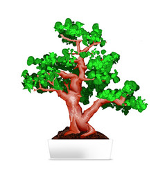 bonsai in white pot vector image
