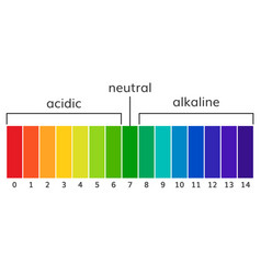 chart ph alkaline and acidic scale vector image