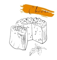 Cheese types Delicious fresh cheese variet cheese vector image