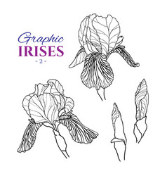 Graphic of irises different angles vector
