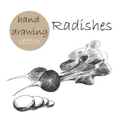Hand Drawn radishes Monochrome sketch vector image