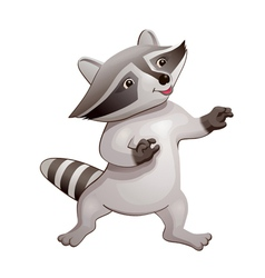 Raccoon vector image