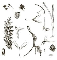Set of twigs pine cones seeds and acorns vector