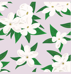 White jasmine flower branch of jasmine flowers vector