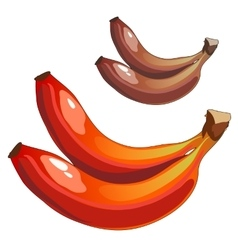Delicious ripe bananas mixed colors brown and red vector image vector image