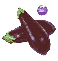 hand drawn aubergine vector image vector image