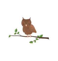 cute owl woodland cartoon bird vector image