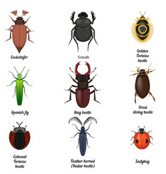 Insect icons set Beetle bug icon entomological vector image vector image