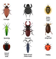 Insect icons set Beetle bug icon entomological vector image