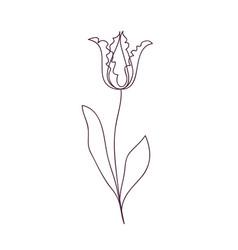 beautiful tulip flower line art concept design vector image