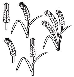 wheat ear thin line icon set vector image
