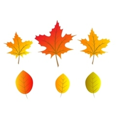 autumn tree leaves vector image vector image
