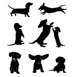 silhouettes of dachshunds vector image vector image