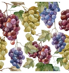 Pattern grapes vector