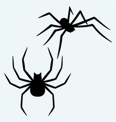 Black spider vector image