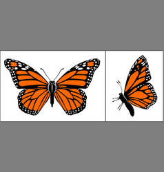 front and side view colourful monarch butterfly vector image