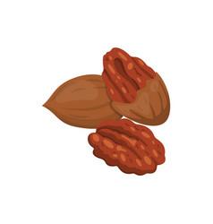 Pecan icon nuts in cartoon style nut food vector