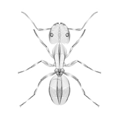 Ant 3d style for print tatto vector image