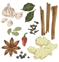 Hand drawn spices set vector
