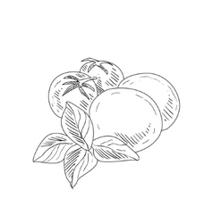 Mozzarella tomato and basil hand drawn realistic vector
