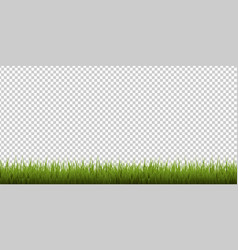 grass border isolated transparent background vector image