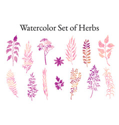 Set herbs plants and flowers vector