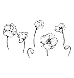 Set of black and white poppies vector image vector image