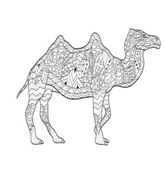 Coloring camel animal for adults vector