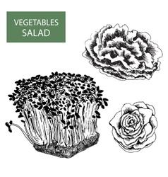 Salad - set of vector image
