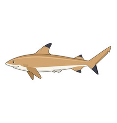 blacktip reef shark fish on a white background vector image