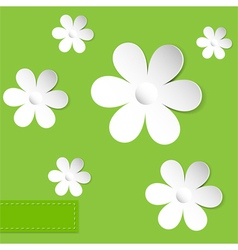 camomiles green background vector image