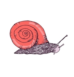 Color hand drawn snails vector image