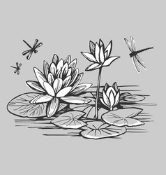 white flowers of a water lily vector image