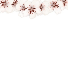 Blooming Sakura Flowers Blossom Isolated vector