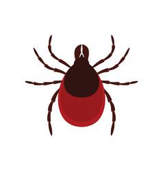 Mite parasites tick parasite acarus vector
