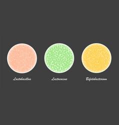 Probiotic bacteria cultures under a microscope vector