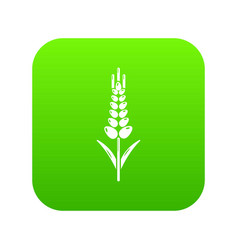 Wheaty wheat icon green vector