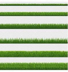 green grass border and transparent background vector image